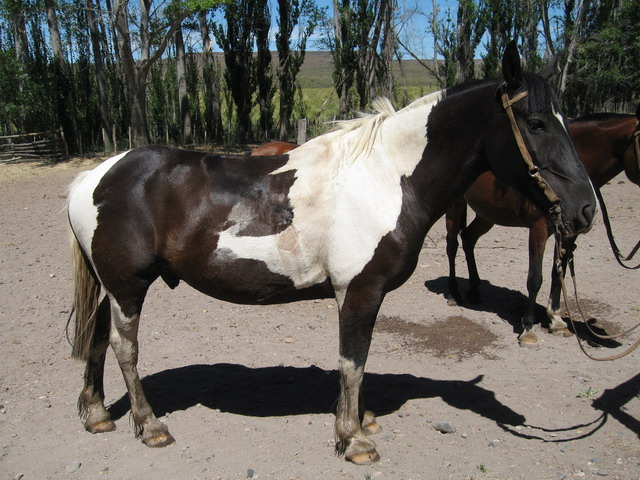 waar leven paarden photo