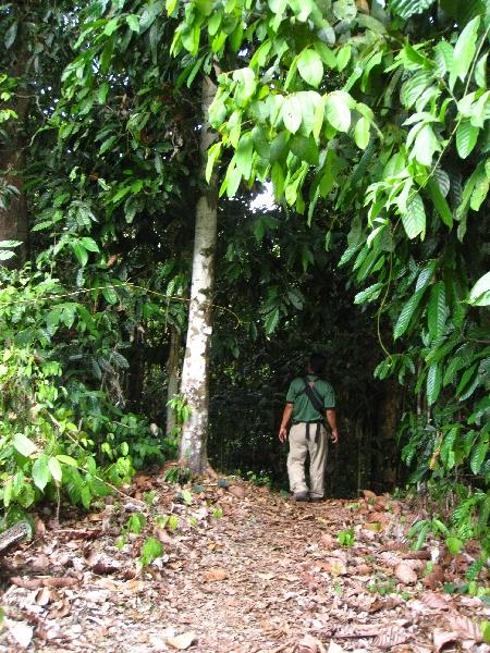 natuur filipijnen regenwoud